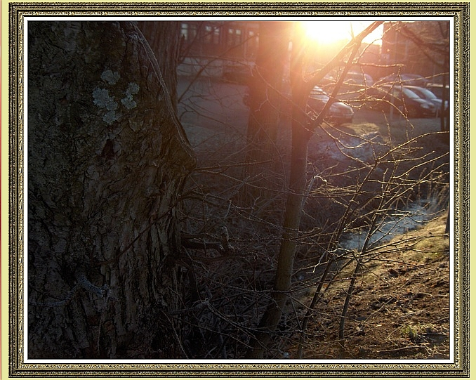TREE trunk with sunrays