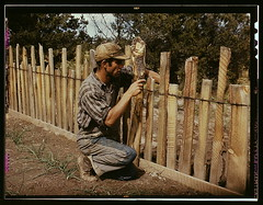 Jack Whinery, homesteader, repairing fence whi...