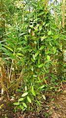 Viel Pflanze
