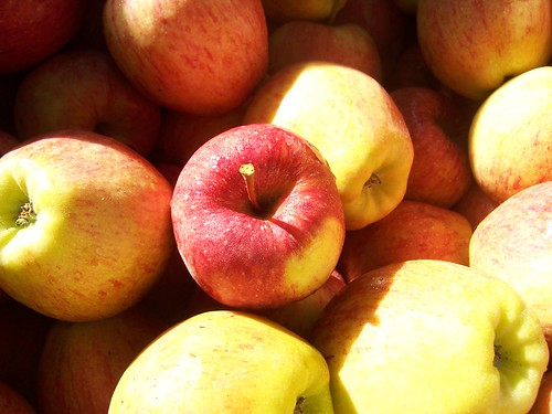 fresh fall apples