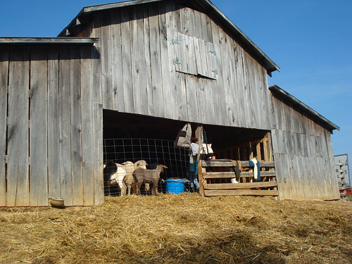 back of the shearing barn