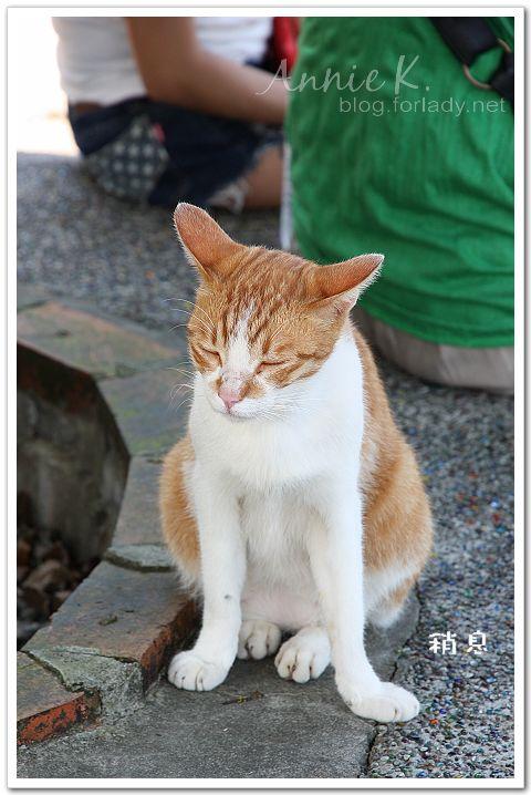 平溪線貓8