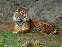 King of Fuengirola Zoo