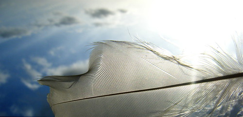 Feather and Sky 2