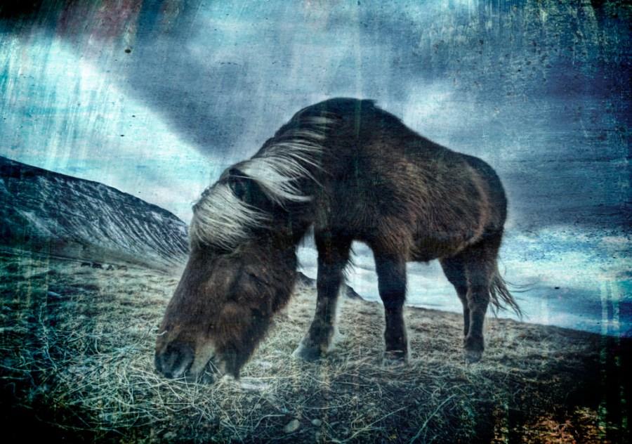 Icelandic Horse, Stuck in Textures
