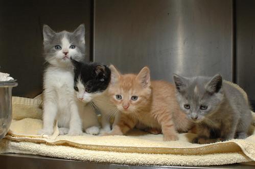 Cute Kittens   James Heaney