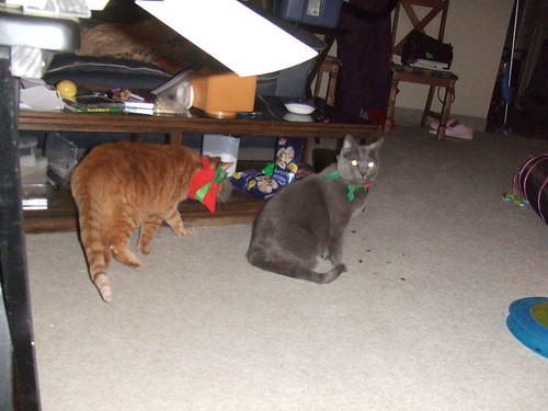 """Apparently Eddy doesn't understand what """"Kitty!  Look here!"""" means"""