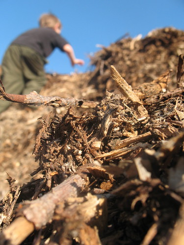 town wood chip pile