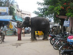 Elephant at the Temple entrance - Thiruaavinankudi
