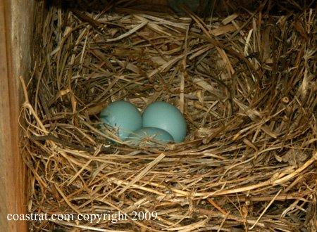 DSC_0008ABCD-Nest#4