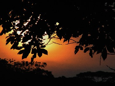 SunsetOutsideCattery_20071007_10x