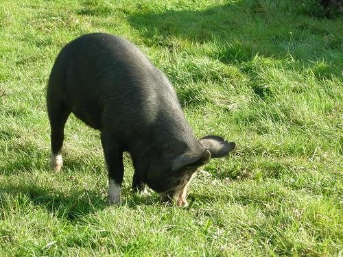 The Hog Blog - February 2008, part 1