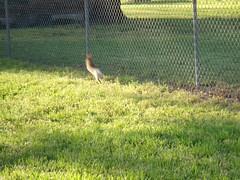Little bunny frufru