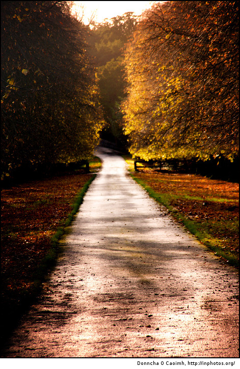 The road to Blarney Castle