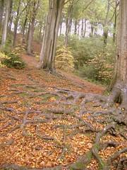 Autumn Roots