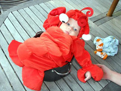 Lobster for dinner? Or, for Halloween?