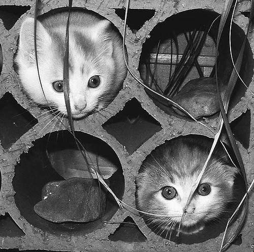 gatos en formacion