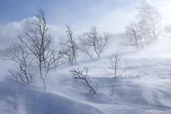 Nieve y viento