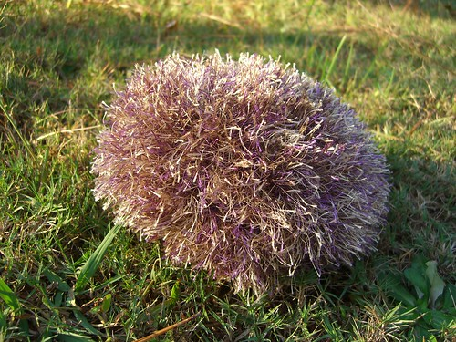 * A tribble!  Its a TRIBBLE!!!