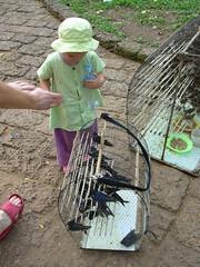 Merit birds, Wat Phnom
