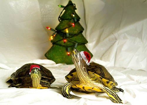 Santa pet turtle sliders