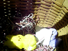 peeps test video on flickr