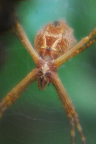 macro -spider