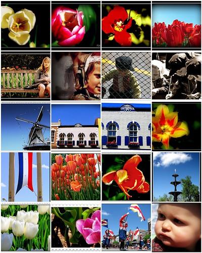 Pella Tulip Collection