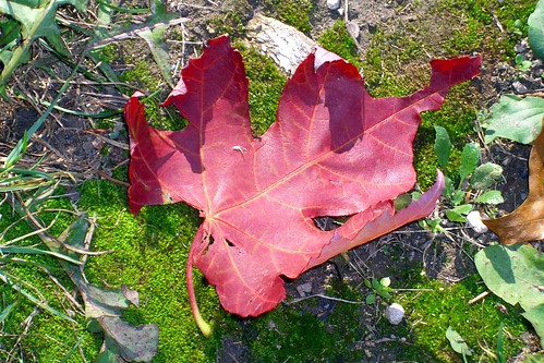leaf in moss