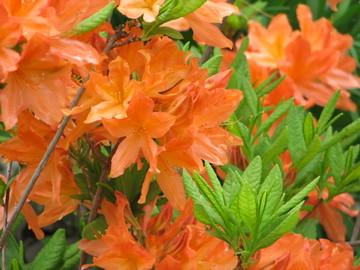 Grammie's bush 2007