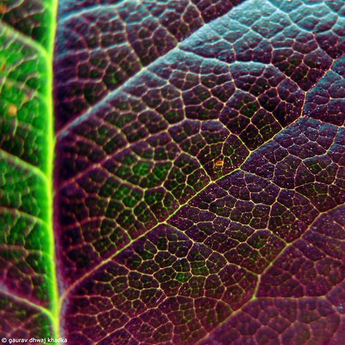 The dark side of the leaf….by Gaurav Dhwaj Khadka