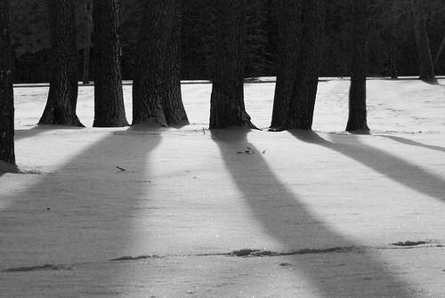 tree shadows3
