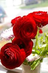 Renonculus flowers