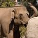 San Diego Zoo 098