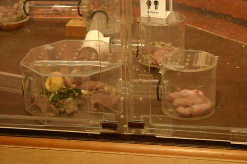 Seattle - Pacific Science Center - Naked Mole Rats (By Ryan Somma)