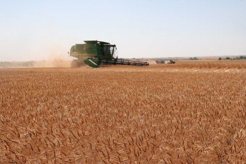 Combine opening up terrace with grain cart in the background
