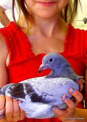 Hilltown Birdbrains (Photo credit: Sienna Wildfield)