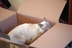box inspection