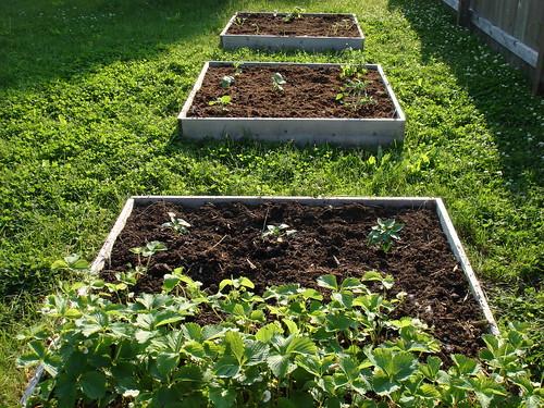garden beds 6-1-2008 6-10-21 PM