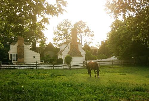 williamsburg horse
