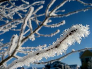 snowy branch