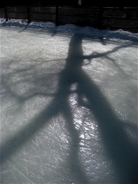 tree silhouette on ice
