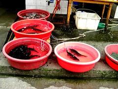 Fish Tubs.jpg