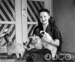 olivia-de-havilland-with-cats