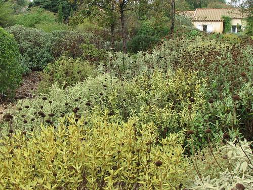 The trial garden at Pépinière Filippi (www.jardin-sec.com), Meze, France