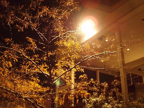 11/17 snow on tree