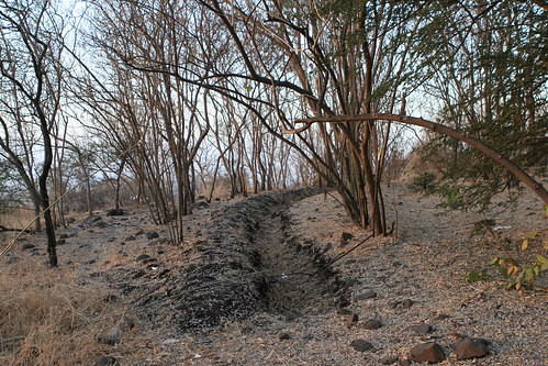 Forest Management, Vetal Tekdi