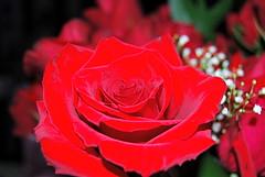 Jon gave me roses for Valentine's day