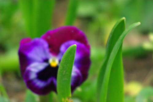 flower, istanbul, pentax k10d