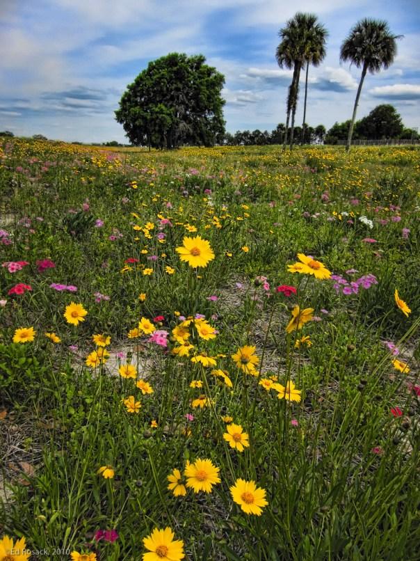 Roadside flowers (IMG_0713)